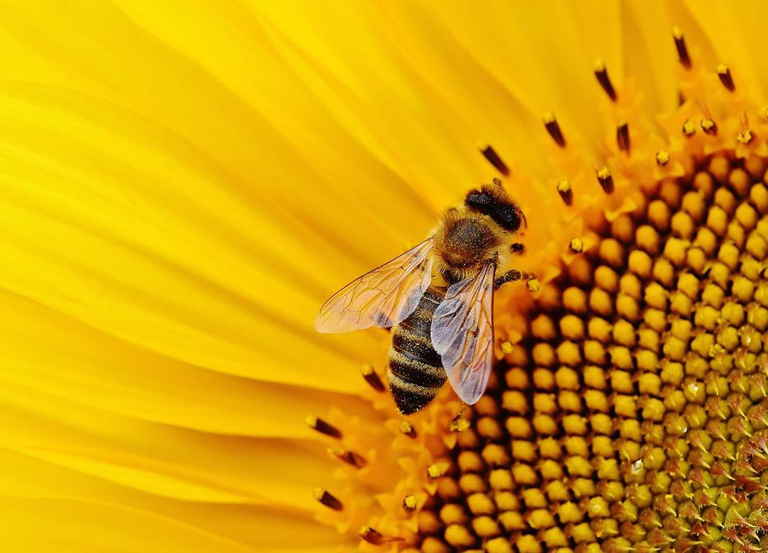 Recheis Bienenparadies