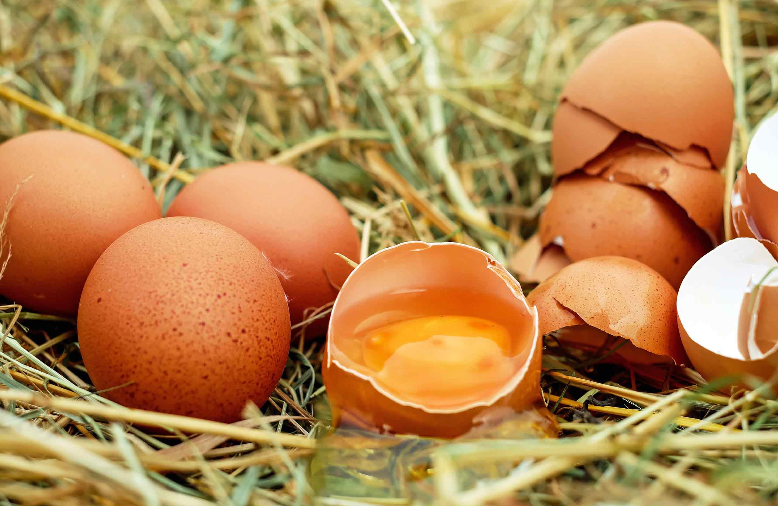 spezialist-eierteigwaren