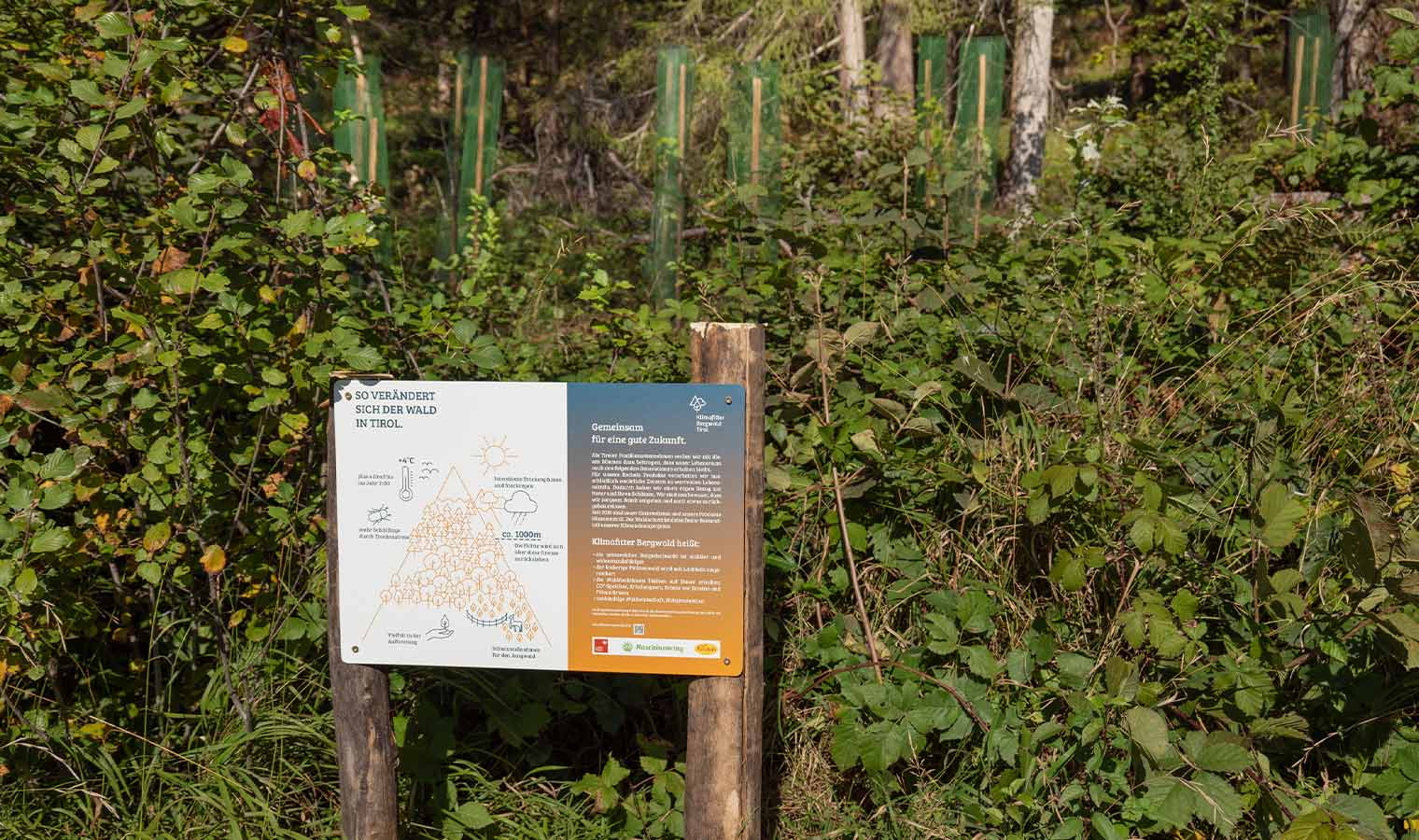 100 Bäume für den Klimaschutz